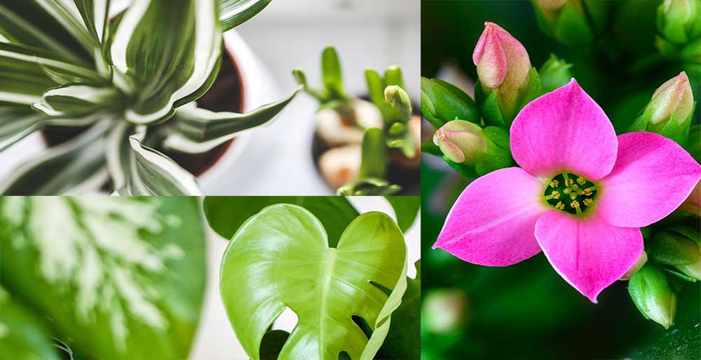 10 Popular Houseplants you Should Grow
